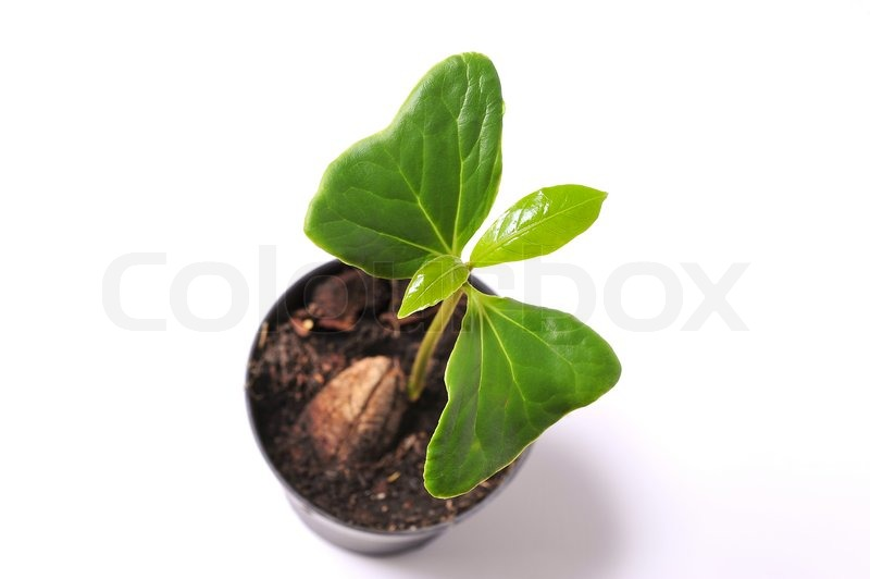 Stock image of 'Green sprout'
