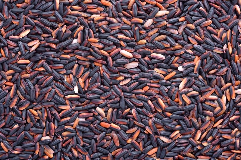 Stock image of 'Black glutinous rice'