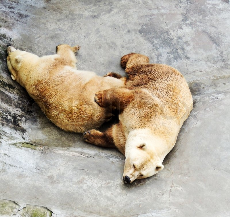 Stock image of 'Closed two polar bear in zoo'