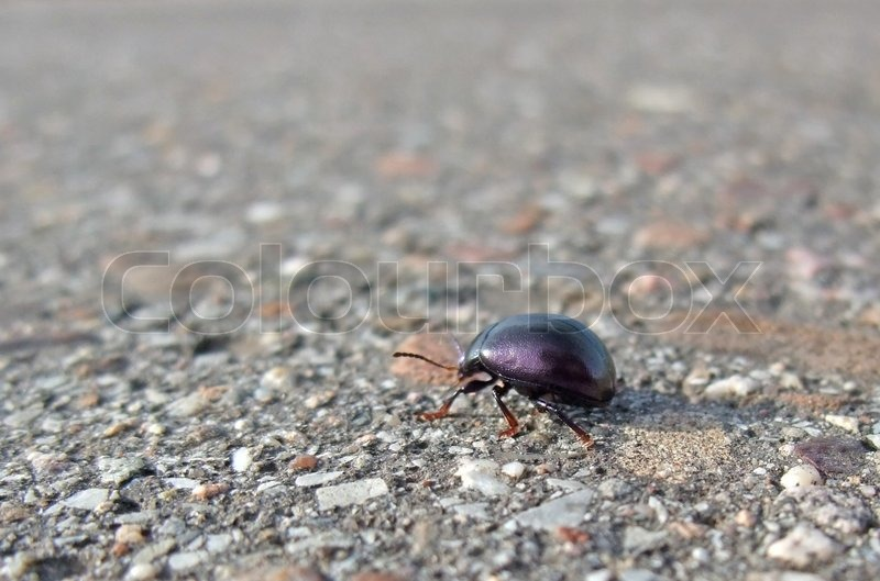 Stock image of 'Bug backside while walking on pavement'