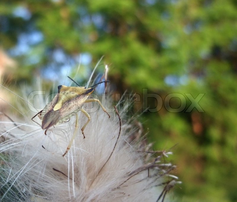 Stock image of 'Stink bug at summer time'