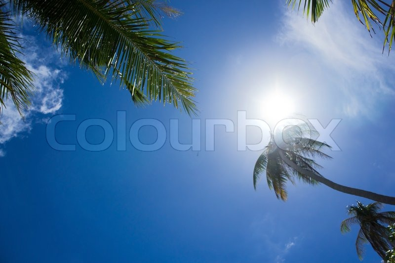 Stock image of 'Palm tree against sun'