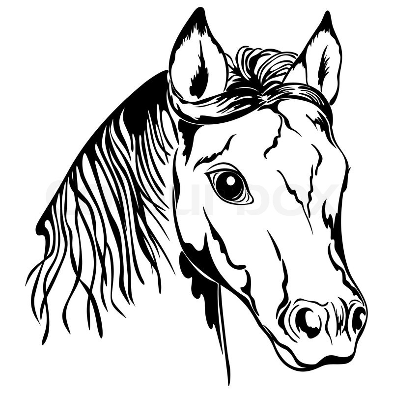 Horse Face Line Drawing : Outline of horse head black and white stock vector