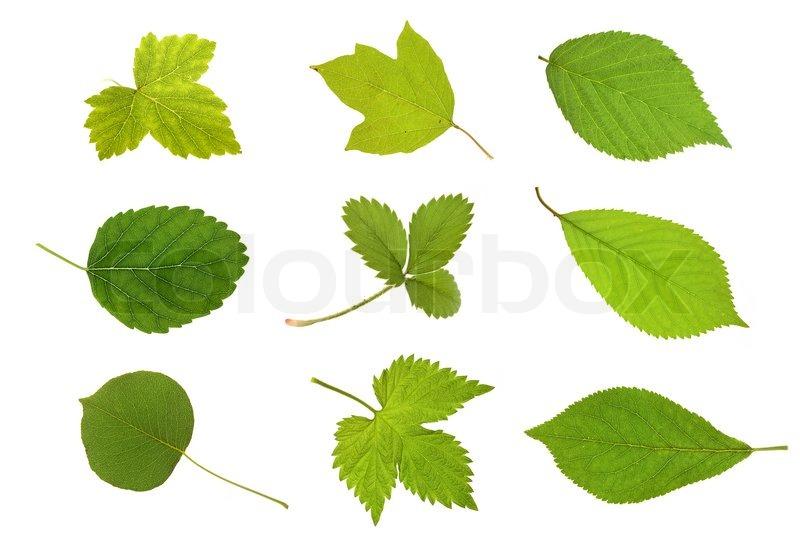 Herbarium Blätter sammlung obst blätter stockfoto colourbox