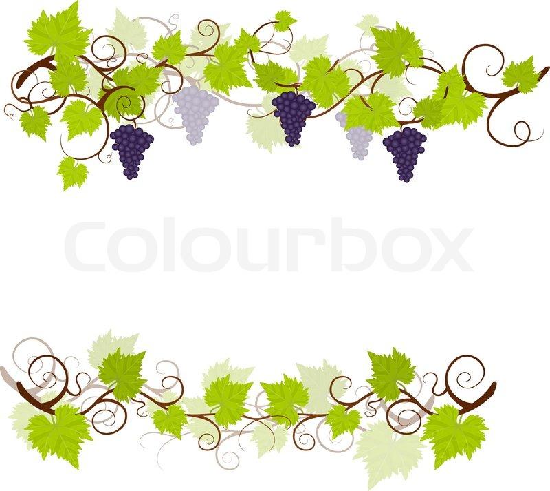 Garden Weinreben Rahmen | Vektorgrafik | Colourbox
