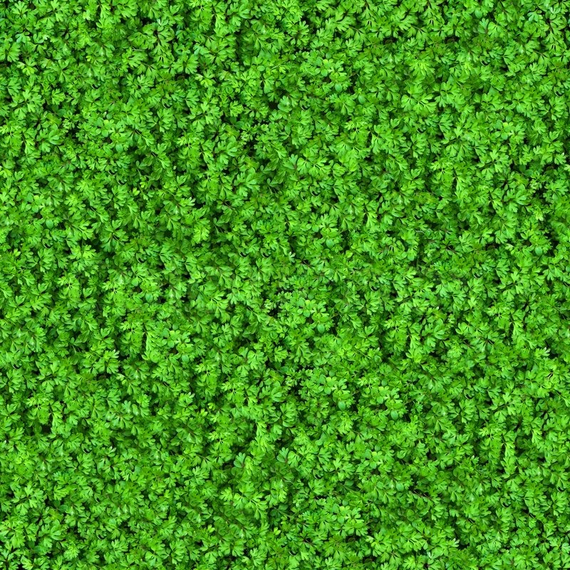 Green Meadow Grass Seamless Texture Stock Photo Colourbox