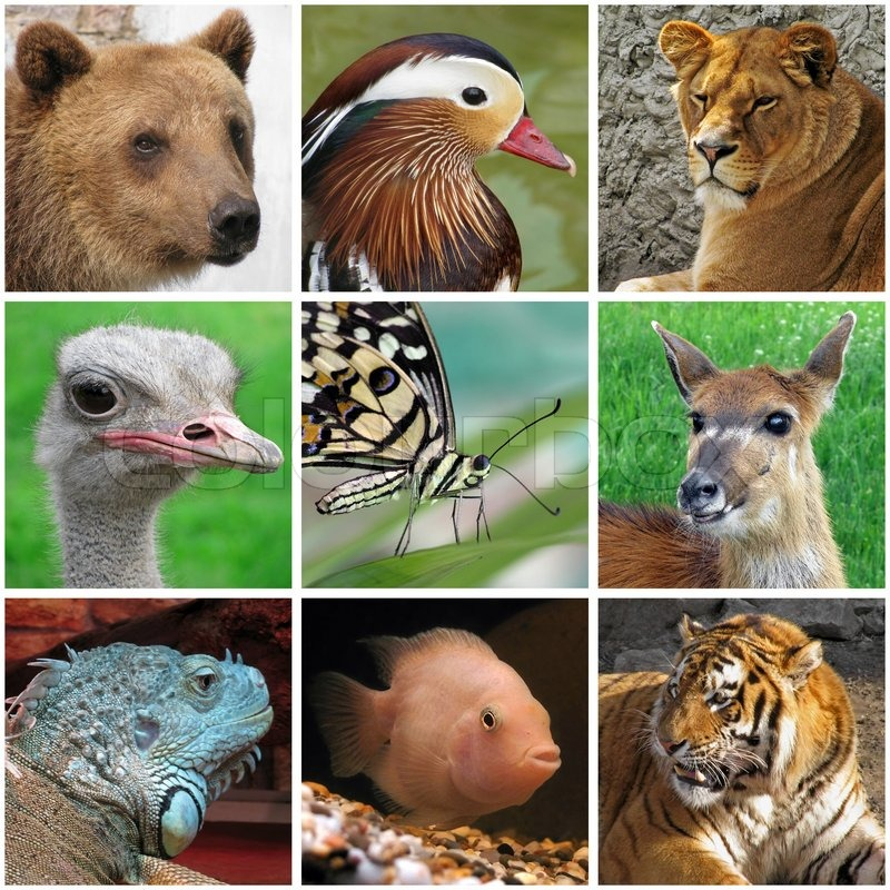 Stock image of 'Collage with animals from zoo'