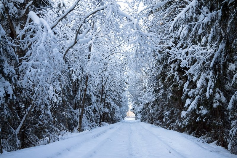 Winter landscape with the wood, stock photo