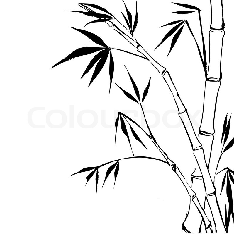 Bamboo Isolated Over White Vector Stock Vector Colourbox