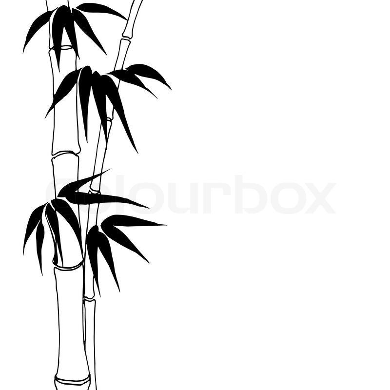 Bambus | Vektorgrafik | Colourbox