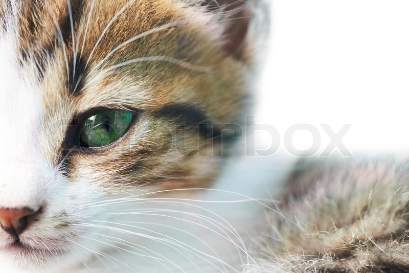 Little grey kitty cat with green eyes isolated on white, stock photo