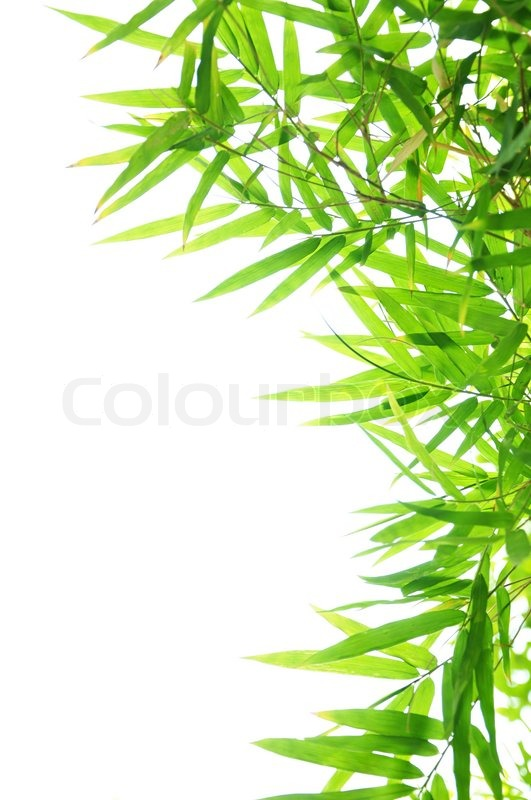 green bamboo leaf background border design stock photo