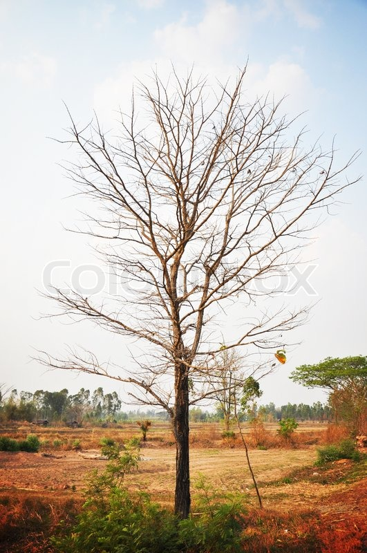 Dry tree with no leaves in the ... | Stock image | Colourbox