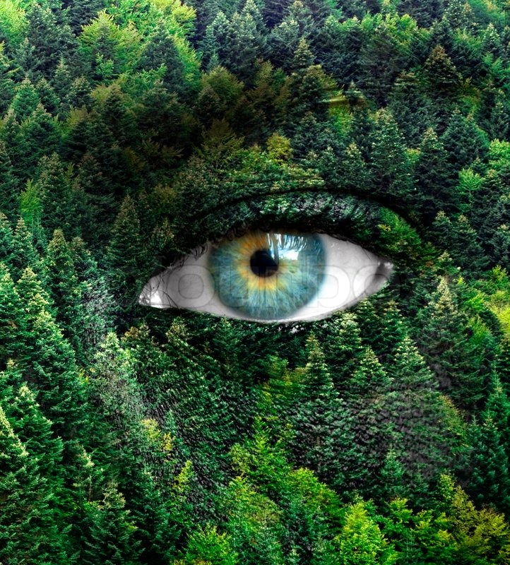 green forest and human eyes save nature concept stock photo colourbox