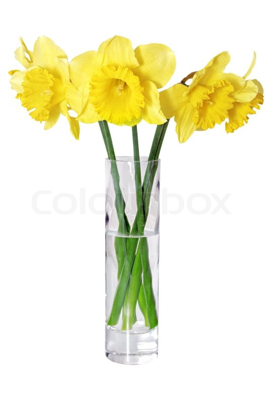 Beautiful spring flowers in vase yellow narcissus daffodil stock beautiful spring flowers in vase yellow narcissus daffodil stock photo mightylinksfo