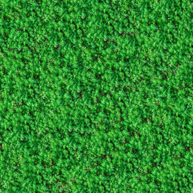 Seamless Tileable Texture Of Green Meadow Grass Stock