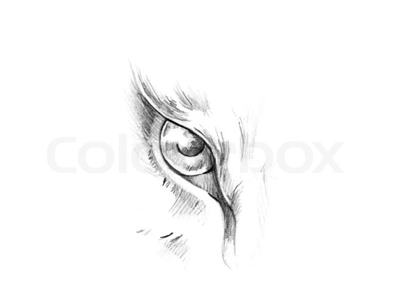 Skizze der Tattoo-Kunst , Tier Augen   Stockfoto   Colourbox