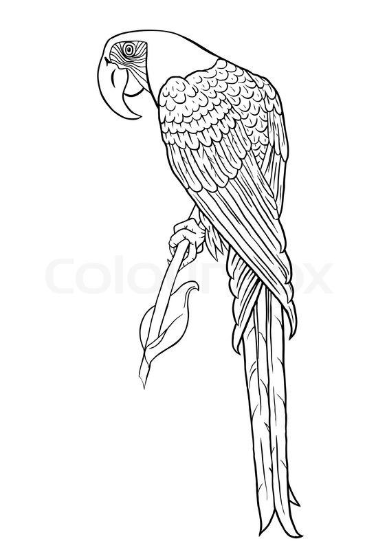 Papagei Silhouette Stock Vektor Colourbox
