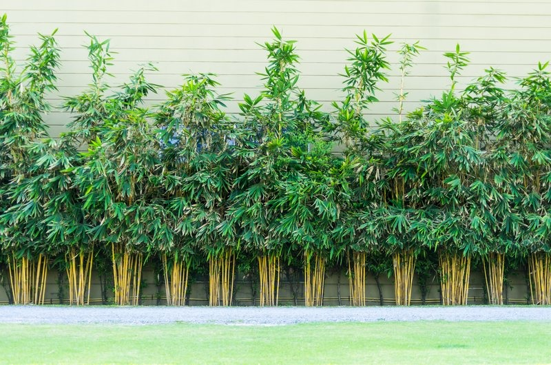 Planting Bamboo Wall Stock Image Colourbox