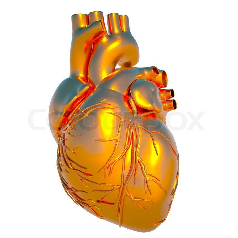 Modell des menschlichen Herzens - Herz aus Gold   Stockfoto   Colourbox