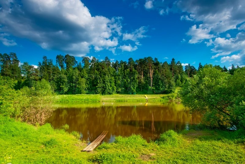 Summer Landscape With A Small Lake On The Background Of Pine Trees Stock Photo Colourbox