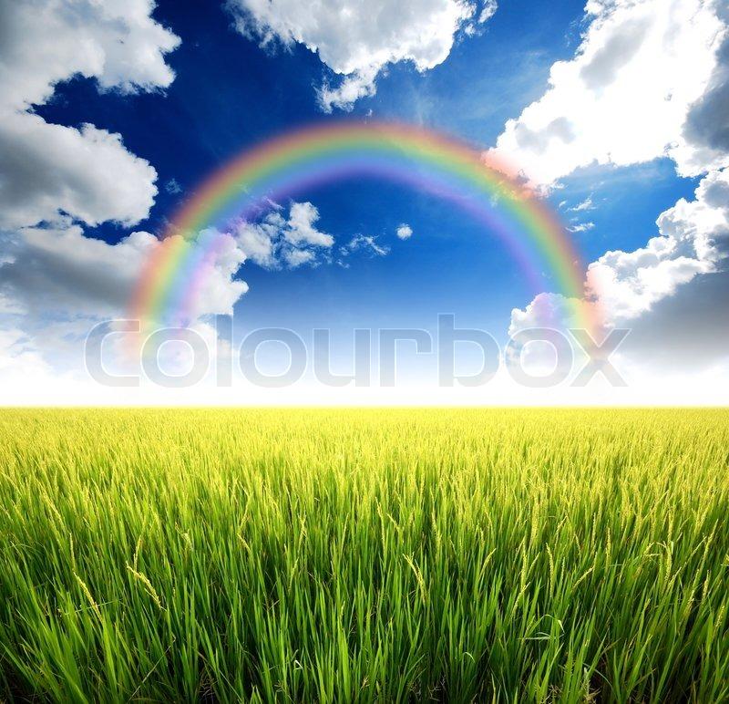 green grass blue sky flowers. Green Grass Blue Sky Flower Rainbow, Stock Photo Flowers Colourbox