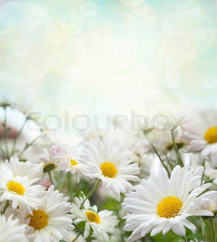 White flowers, stock photo