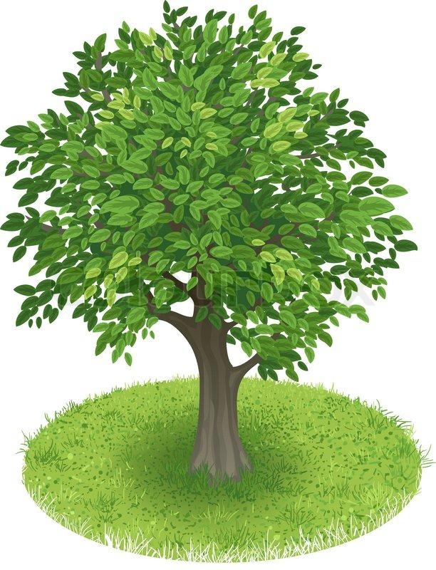 Baum Im Grünen Bereich Vektorgrafik Colourbox