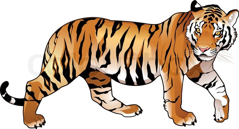 red tiger cartoon and vector isolated animal stock vector rh colourbox com tiger cartoon images to draw tiger cartoon images black and white