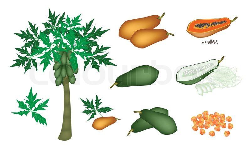 Natural Food Graphic Designer