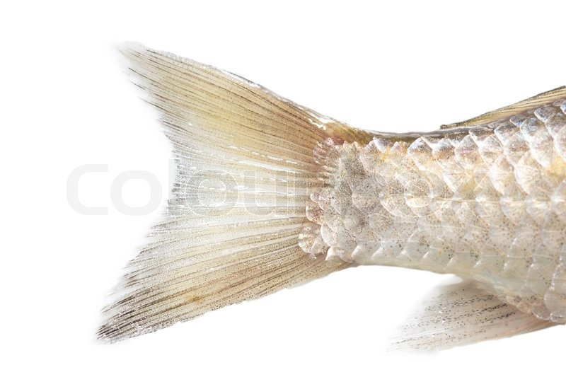 Fish tail on a white background macro stock photo for Fish and tails