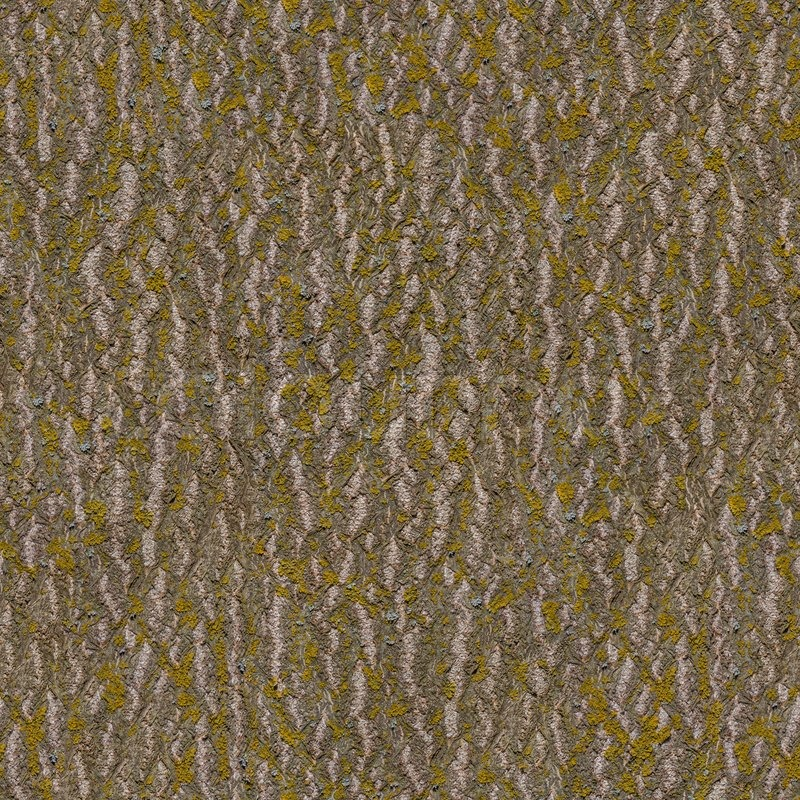 Elm Bark Seamless Texture Stock Bild Colourbox