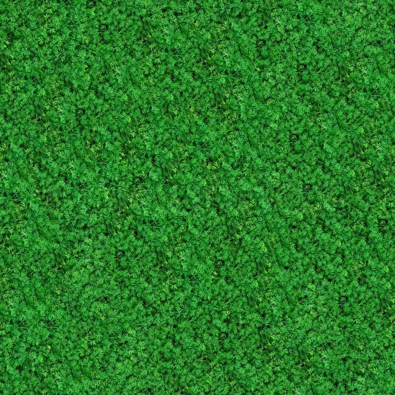 Seamless Texture Green Meadow Grass, stock photo