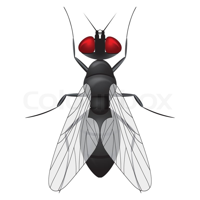 Fly insect sketch symbol illustration. Housefly vector icon design ...