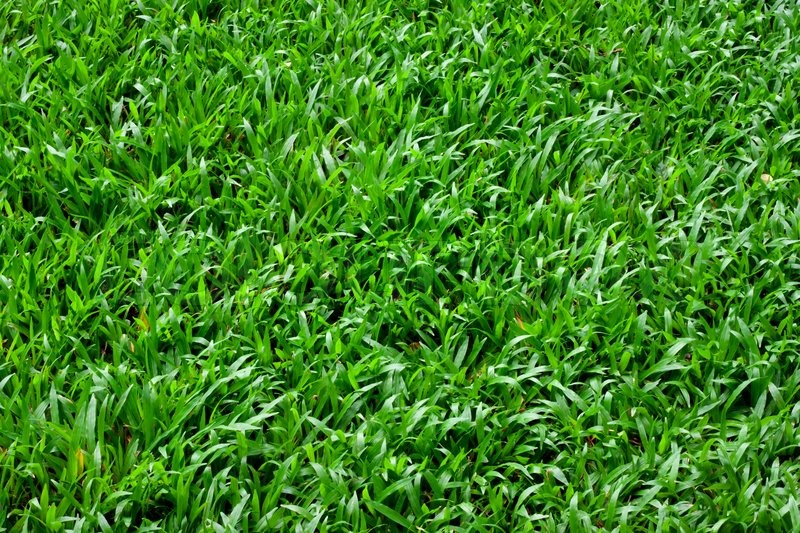 Beautiful Green Grass Texture From The Stock Photo