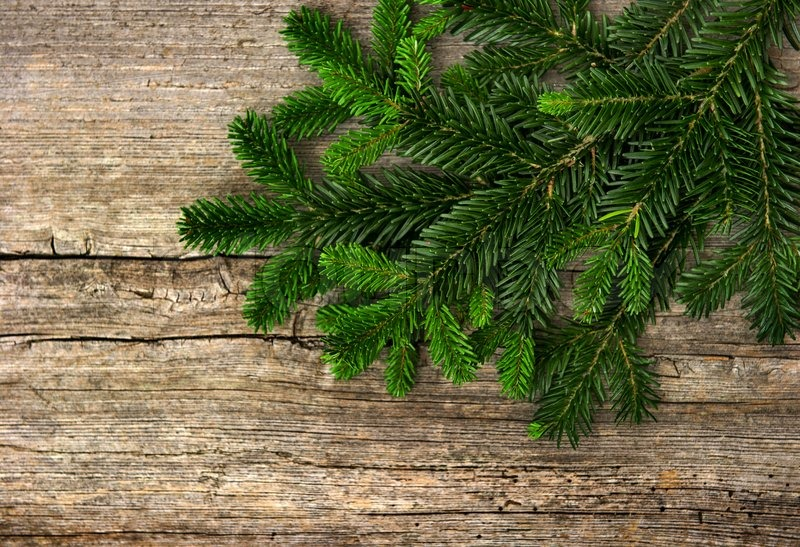Fir tree branch on rustic wooden background | Stock Photo | Colourbox