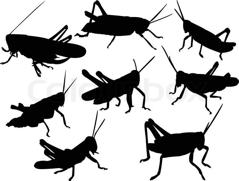 Grasshoppers silhouette collection - vector   Stock Vector ...
