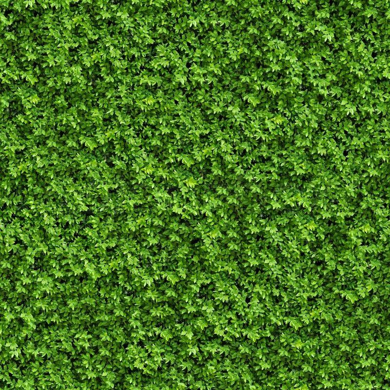Green bush seamless tileable texture stock photo for Green pflanzen