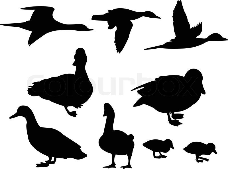 ducks silhouette collection vector stock vector