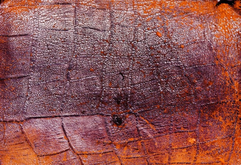 old worn leather background stock photo colourbox