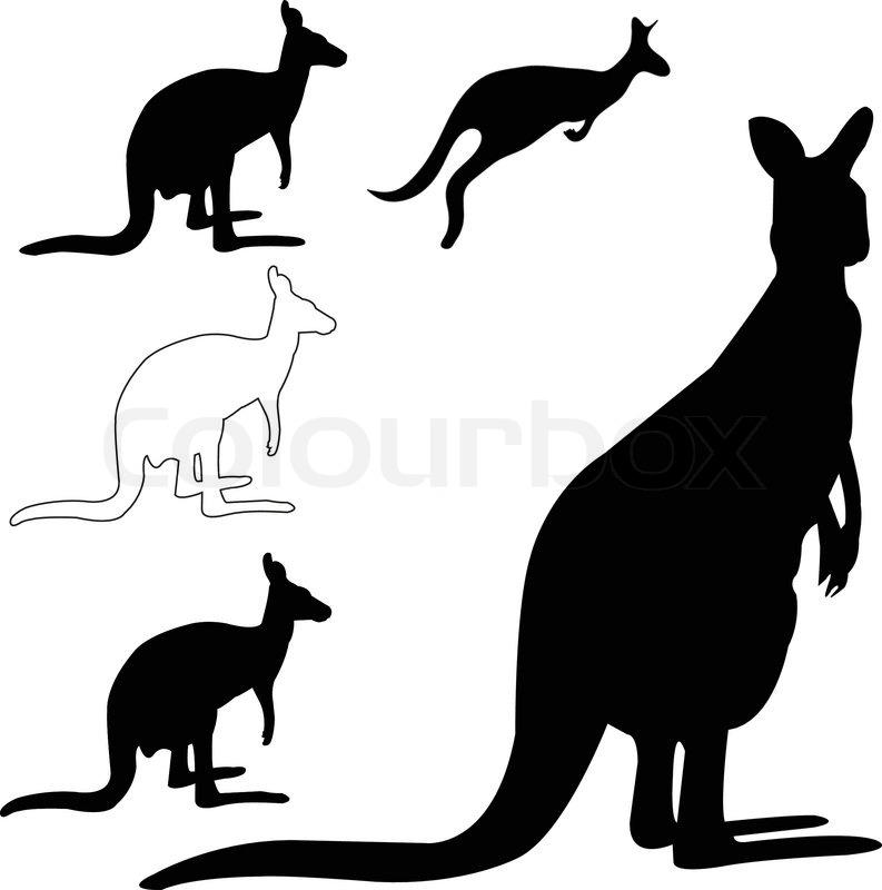 Ausgezeichnet Känguru Anatomie Weiblich Zeitgenössisch - Menschliche ...