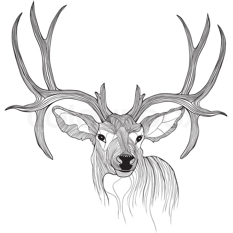 Deer Head Vector Animal Illustration For T shirt Sketch