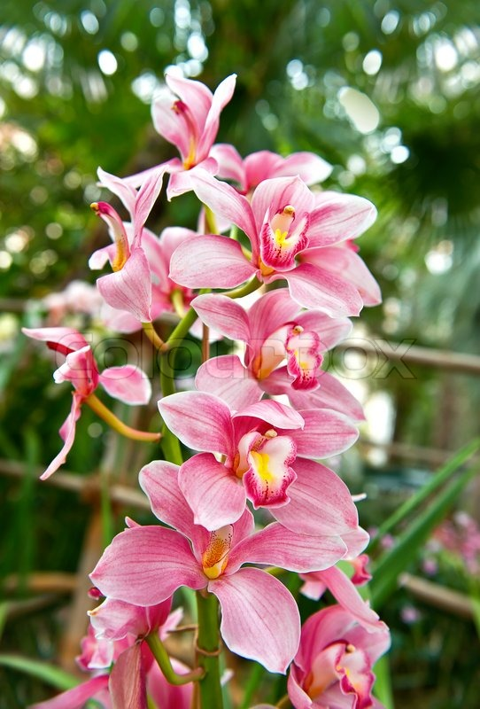 Pink orchid flower with tropical plants stock photo colourbox mightylinksfo