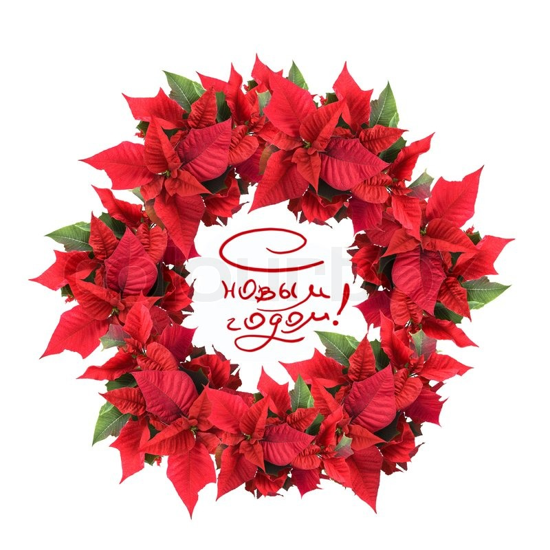 Christmas wreath from poinsettia stock photo colourbox for 5ft poinsettia garland christmas decoration