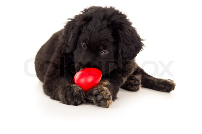 how to stop labrador puppy from biting