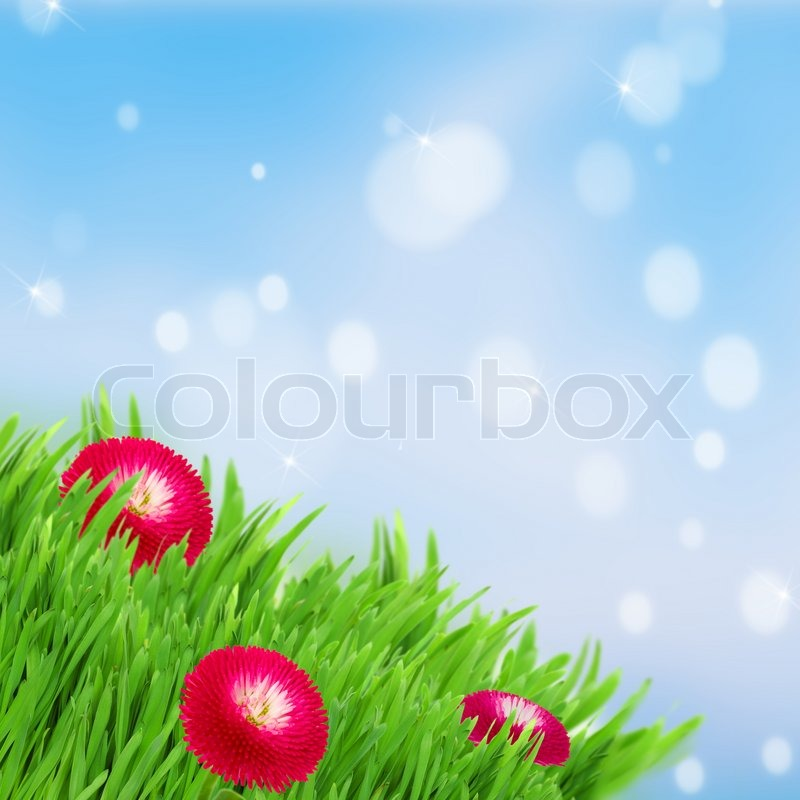 Blue Green Flower Green Grass Lawn With Red Daisy Flowers on Blue Sky Stock Photo