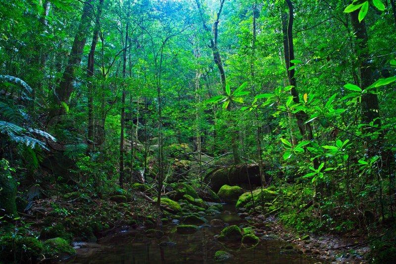 tropischer regenwald landschaft thailand asien stockfoto colourbox. Black Bedroom Furniture Sets. Home Design Ideas