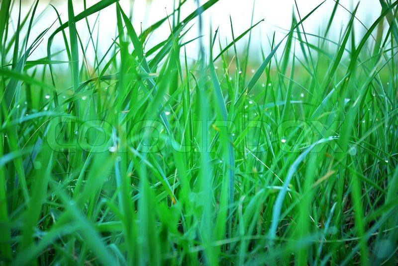 verschwommene das gras auf der wiese im morgentau stockfoto colourbox. Black Bedroom Furniture Sets. Home Design Ideas