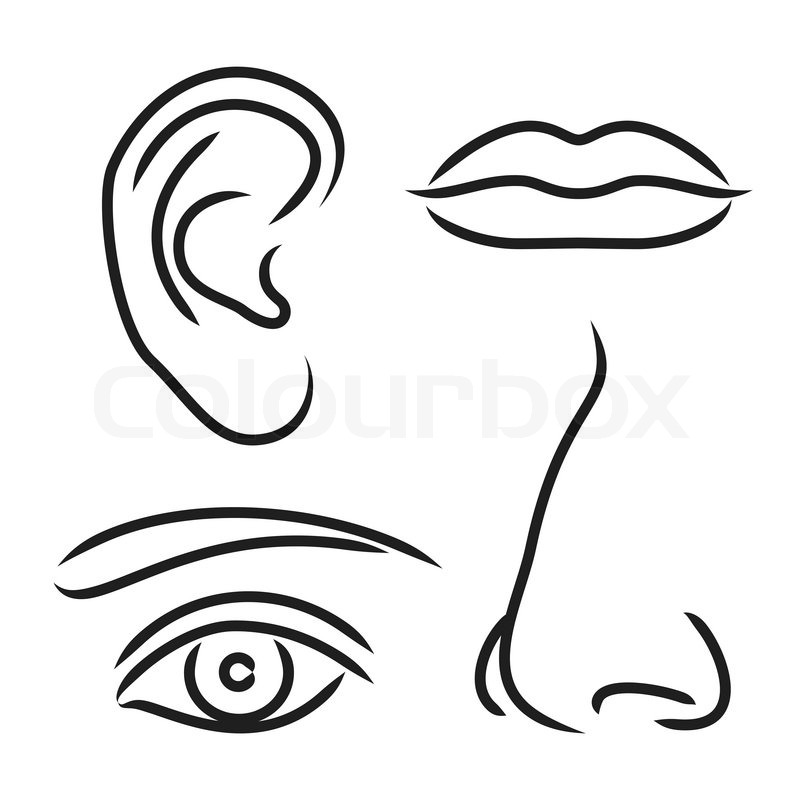 vector illustration nose ear mouth and eye stock vector colourbox