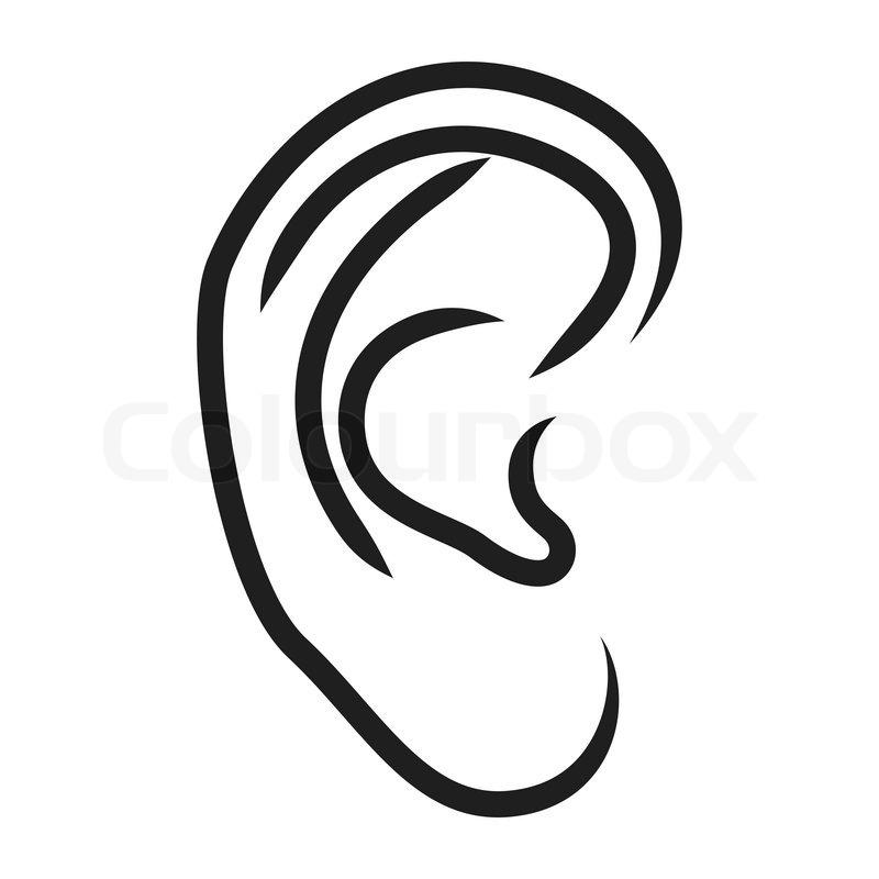 The human ear - vector illustration | Stock Vector | Colourbox